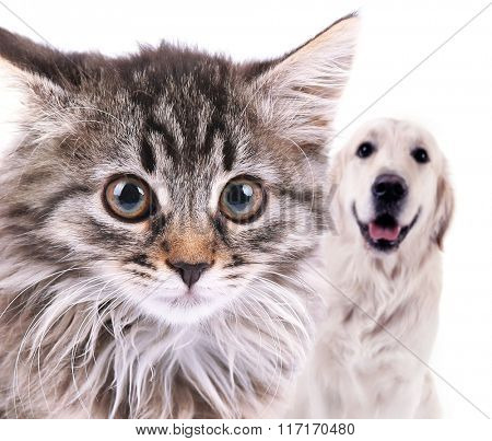 Angry cat and happy dog, isolated on white