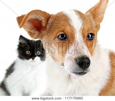Dog and cat, isolated on white