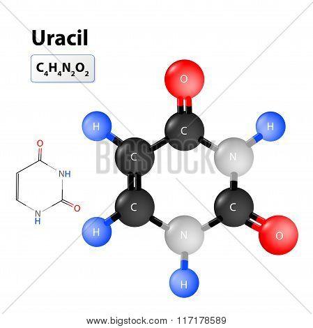 Uracile Molecular Structure