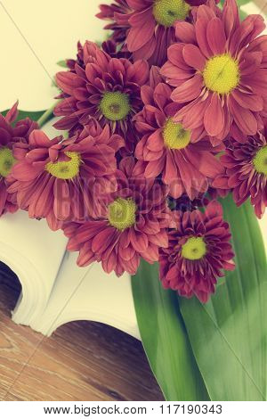 Beautiful Pink Chrysanthemum flower with vintage filter style