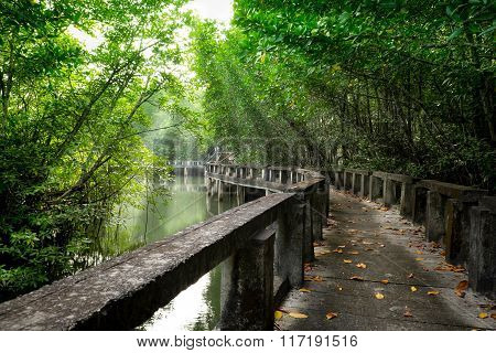 Mangrove forest with Cement bridge