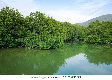 Nature Mangrove forest at Koh Chang Island,Thailand