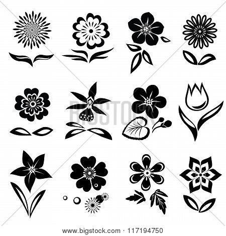 Flowers and leaves icons set. Nasturtium, camomile, primula, anemone, tulip, gowan, orchid, dog-dais