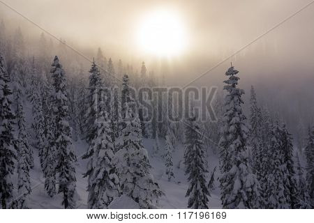 Hazy Sunset Over Layers of Snow Covered Trees in Mountain Forest