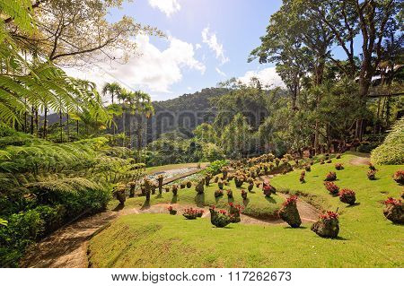 Martinique, Carribean The Beautiful Garden Of Balata