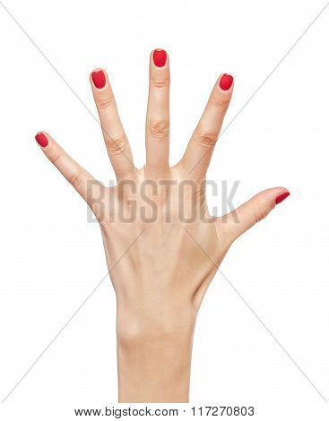 Female hand five fingers.