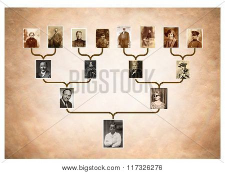 Tree Of Family History
