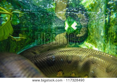 snake under water