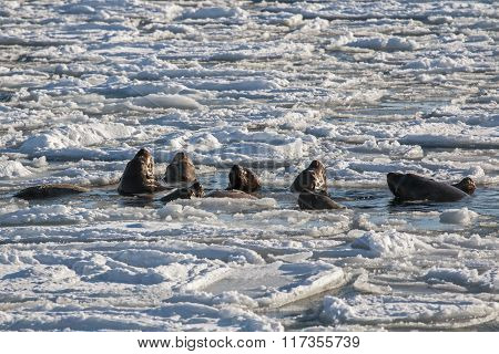 sea lion family bathing in the sea