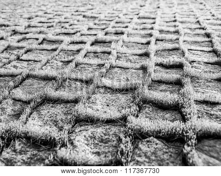 Moss on a granite path