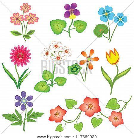 Flower set. Nasturtium, primula, viola, anemone, tulip, gowan, dog-daisy, petunia. Spring flowers. F