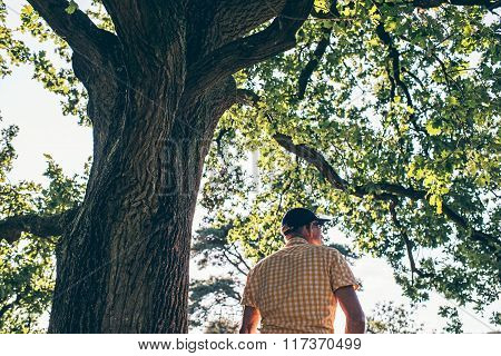 Rear View Of Man Sitting On Branch Of Old Tree.