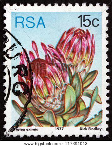Postage Stamp South Africa 1977 Broad-leaf Sugarbush, Flowering