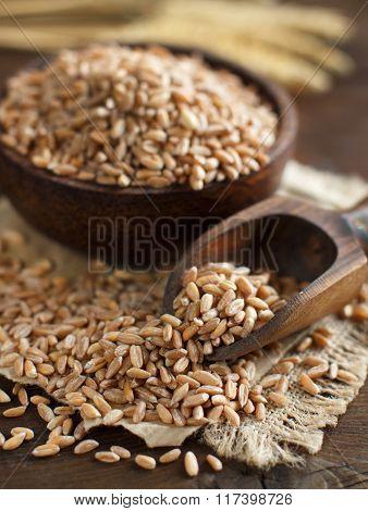 Whole Spelt Grain And Spelt Ears On The Table