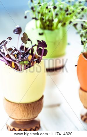 Growing healthy sprouts in Easter egg shell dieting concept and easter decoration idea. poster