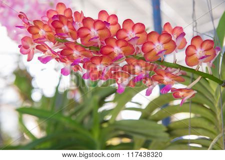 Beautiful orchids flower tree.