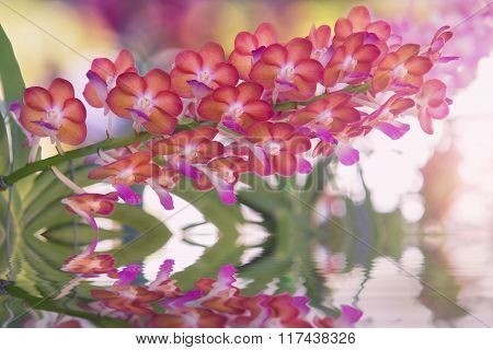 Beautiful red orchids flower tree and water reflection.