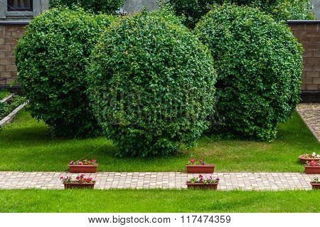 Manicured Garden Trees