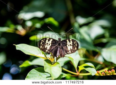 Black And Yellow Butterfly In Spot Of Light