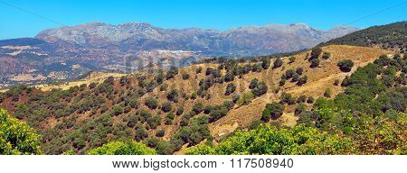 Andalusian Landscape Panorama.