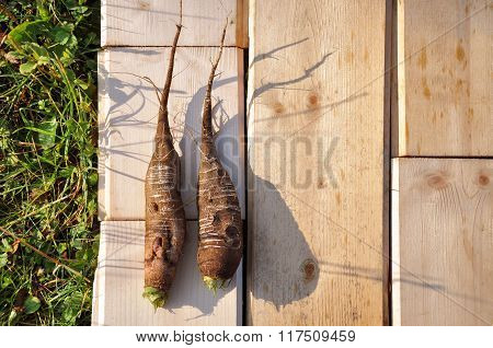 Fresh radish on a wooden board.