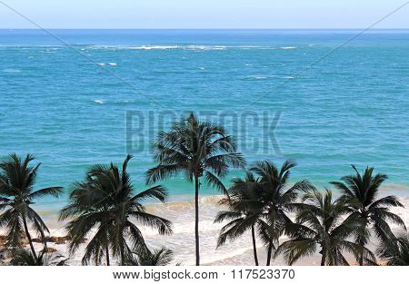 Palm Trees and Blue Water