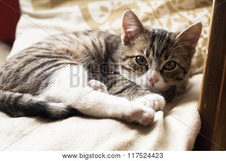 Young Cute Cat Sleeping On The Couch