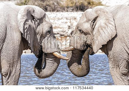 Two African Elephants Face To Face At The Water Pool In Etoshna National Park, Namibia