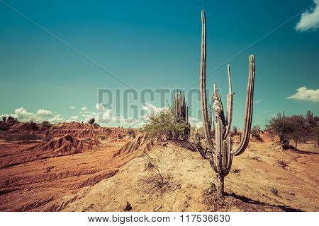 big cactuses in red desert, tatacoa desert, colombia, latin america, clouds and sand, red sand in desert poster