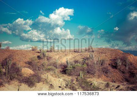 big cactuses in red desert, tatacoa desert, colombia, latin america