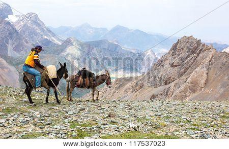 Donkey caravan in remote Asian mountain area