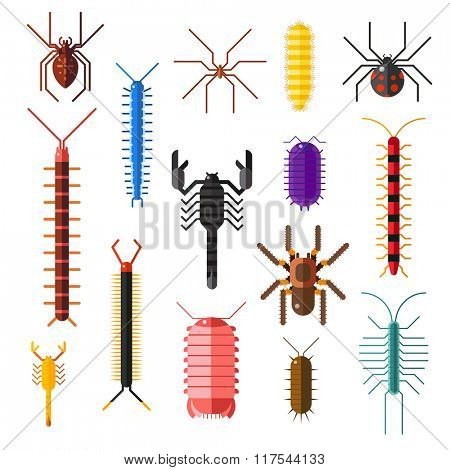 Spiders and scorpions dangerous insects animals vector cartoon flat illustration. Asia and Africa scorpions and other poisonous animals