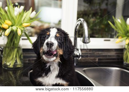 puppy in the sink