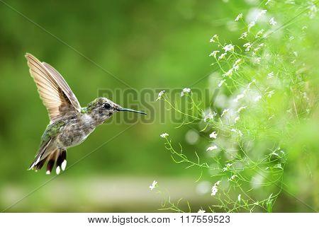 Bird In Flight Against Bright Spring Background