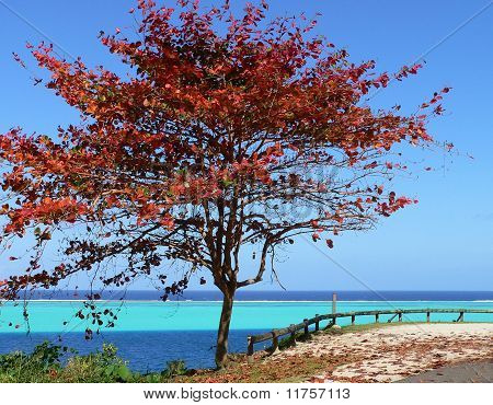 Red tree on tropical island