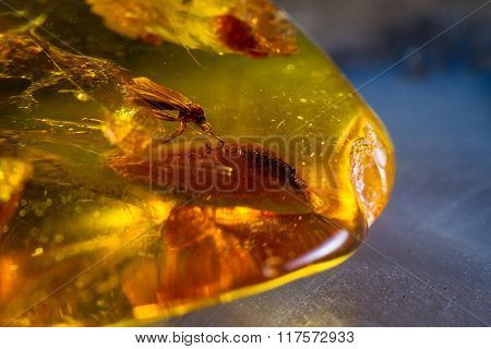 Details Preserved In Amber
