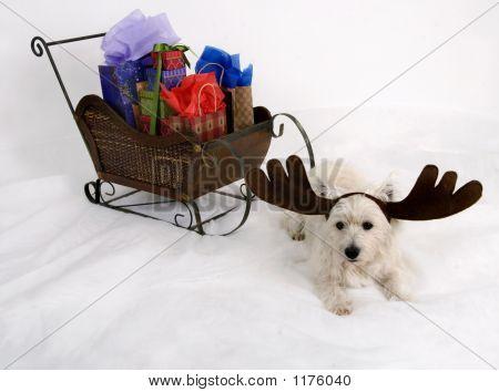Doggone Reindeer