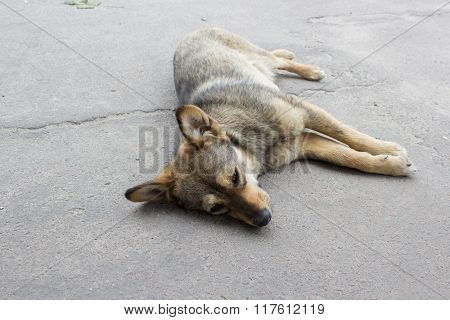 dog dies