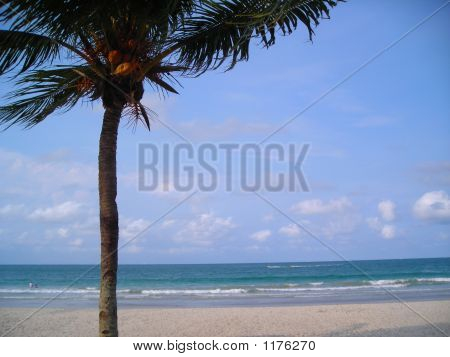 Single Coconut Tree With Copyspace