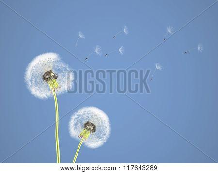 dandelion on colorful background. 3d rendering
