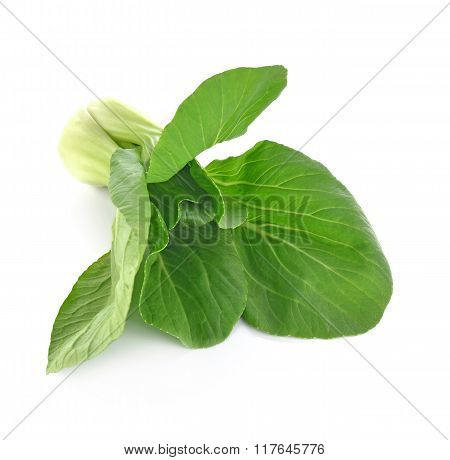Beautiful Bok Choy (chinese Cabbage Or Qing Geng Cai) Isolated On White Background
