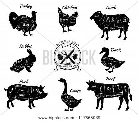 Set Schematic Vew of Animals for Butcher Shop