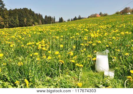 Jug of milk on the meadow. Emmental region, Switzerland