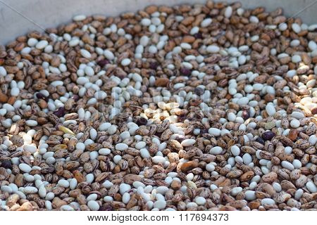 Haricot Seeds In An Allyuminevy Basin