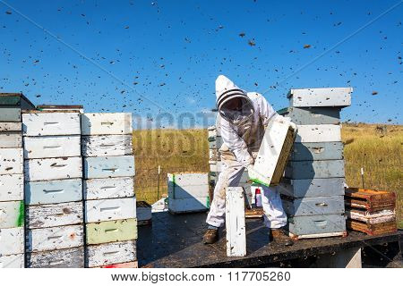 Beekeeper Surrounded By Bees