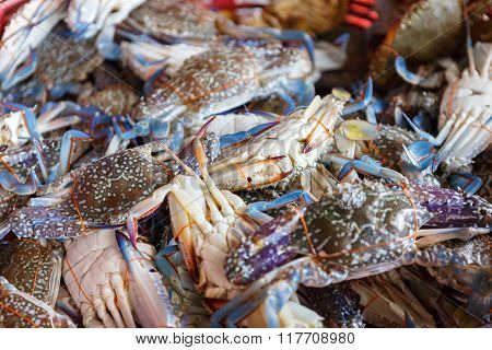 photo of horse crab raw for cooking poster