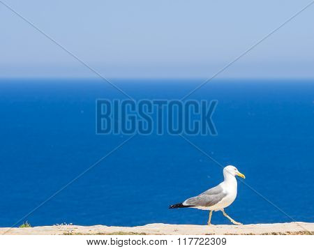 The Seagull Of The Lighthouse
