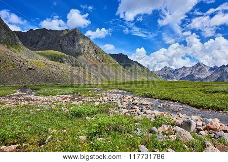 Stream And Mountain Meadow Summer Day