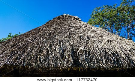 Palm Leaves Roof
