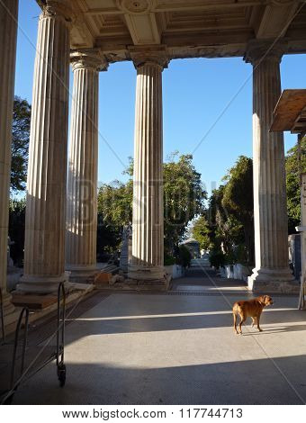 Lonely Dog At A Temple Entrance